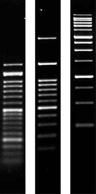 Product Image Agarose SERVA for PCR_molecular biology grade