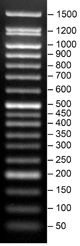Product Image SERVA FastLoad 50 bp DNA ladder_